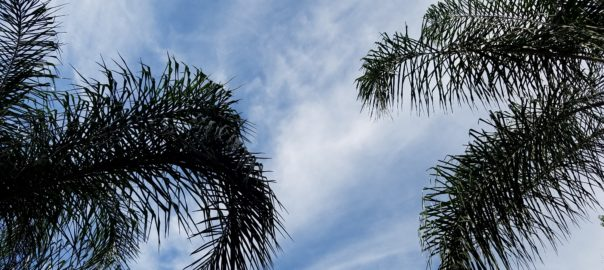 Swaying Palms